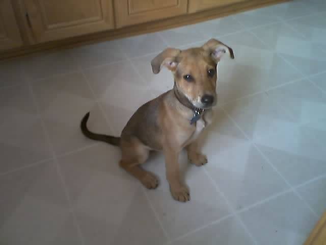 Fiducci as a Puppy