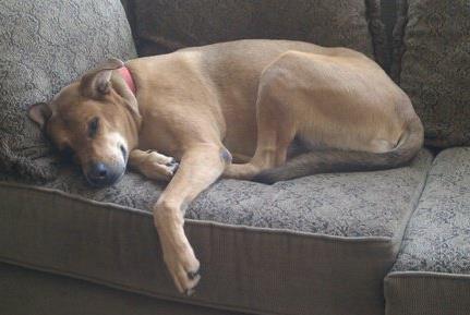 San Diego Dog